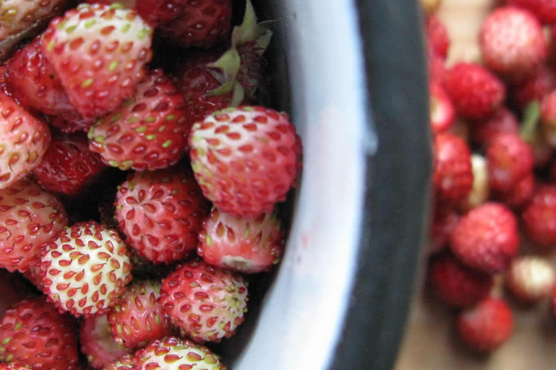 Κάθε εποχή έχει τα (άγρια) φρούτα της στο Ζαγόρι. Άγριες φράουλες, βατόμουρα, κυνόροδα και πολλά άλλα! Εμείς τα μαζεύουμε και σας τα προσφέρουμε φρέσκα ή σαν μαρμελάδα
